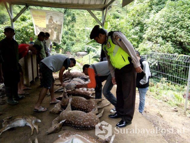 Belasan rusa tutul di penangkaran Coban Jahe ditemukan mati.